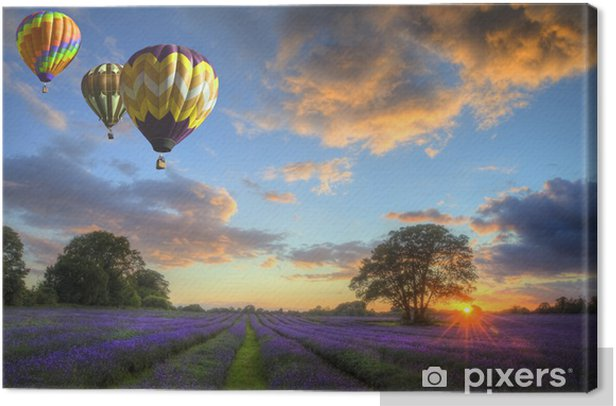 Obraz na płótnie Gorące powietrze balony latające nad lawendy słońca krajobrazu -