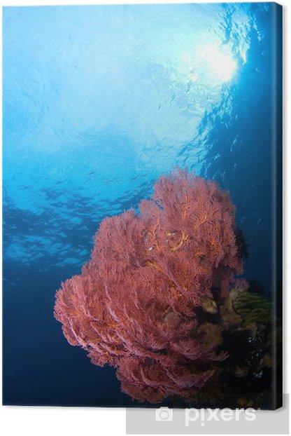 Obraz na płótnie Gorgonian koral Indonezja Sulawesi - Kwiaty