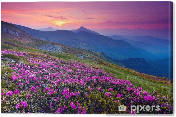 Obraz na płótnie Górski krajobraz - Łąki, pola i trawy