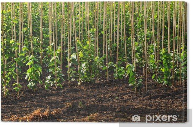 Obraz na płótnie Gospodarstwo plantacji drzewa przedszkole - Rolnictwo