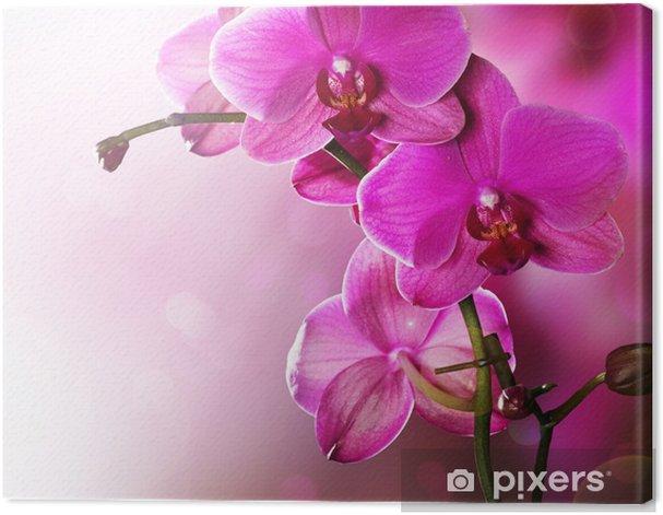 Obraz na płótnie Granicy projekt kwiat orchidei - Tematy