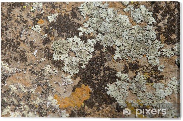 Obraz na płótnie Granitu tekstury. - Tekstury