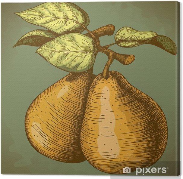Obraz na płótnie Grawerowanie gruszki i liści na gałęzi - Rośliny