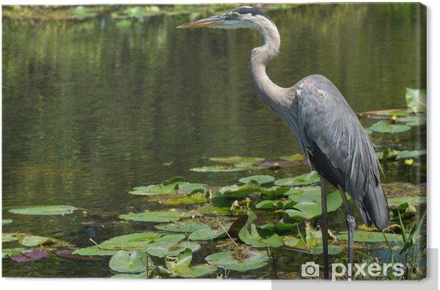 Obraz na płótnie Great Blue Heron (Ardea Herodiady) Stojąc w Waters Edge - Ptaki