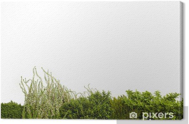 Obraz na płótnie Greenhouse 02 - Religie
