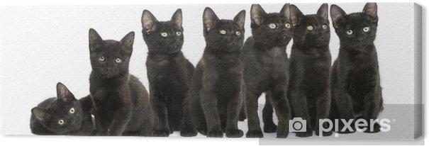 Obraz na płótnie Grupa czarne kocięta siedzi razem, 2 miesiące, izolowane - Ssaki