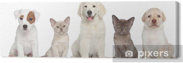 Obraz na płótnie Grupa kotka i szczeniąt - Ssaki