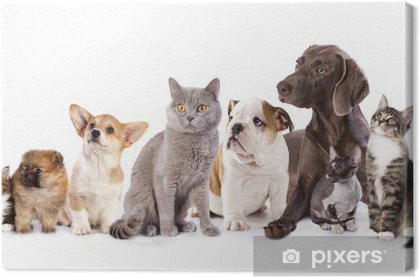 Obraz na płótnie Grupa kotów i psów w białym tle, kotów i psów - Naklejki na ścianę