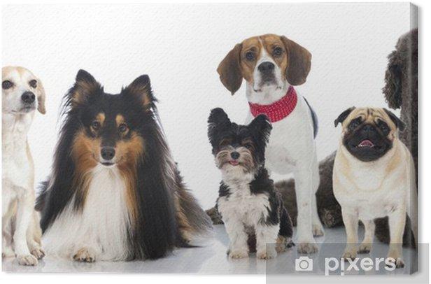 Obraz na płótnie Grupa psów - Grupa von Pies - Ssaki