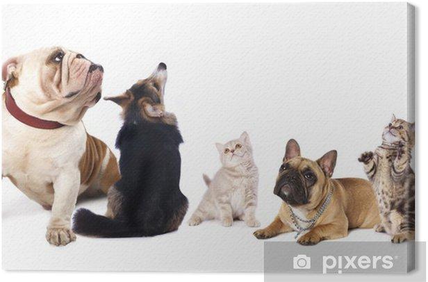 Obraz na płótnie Grupa psów i kotów patrzeć w białym tle. - Ssaki