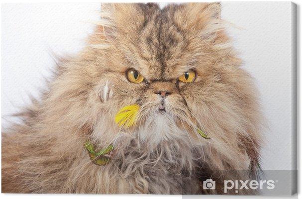 Obraz na płótnie Guilty cat - Ssaki