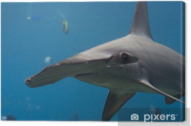 Obraz na płótnie HamHed - Zwierzęta żyjące pod wodą