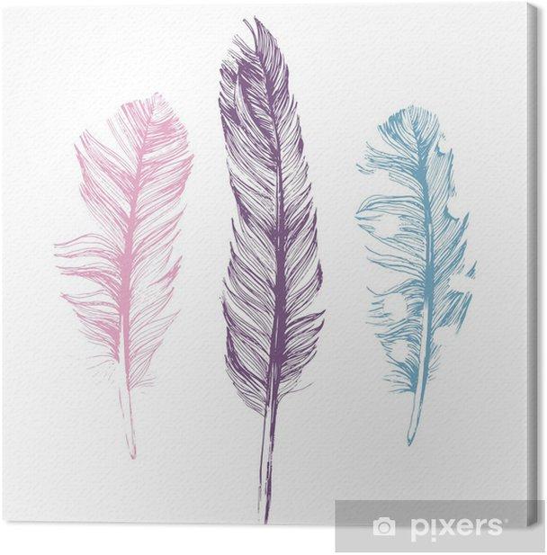 Obraz na płótnie Hand drawn feathers on white background - Ptaki
