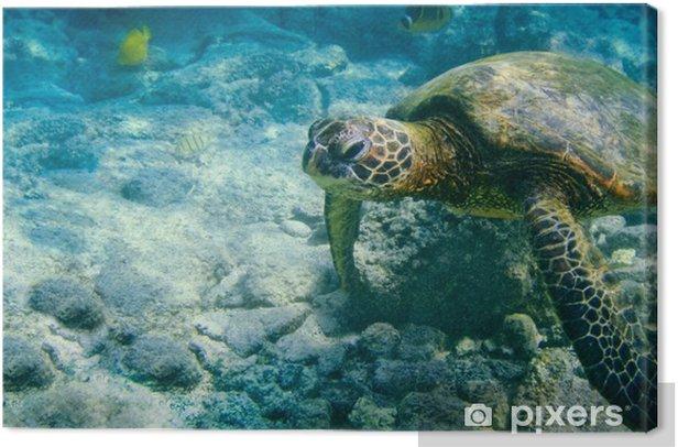 Obraz na płótnie Hawaiian zielony żółw morski - Sporty wodne