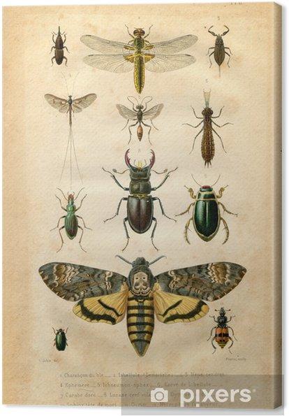Obraz na płótnie Histoire naturelle: Les insectes - Inne Inne