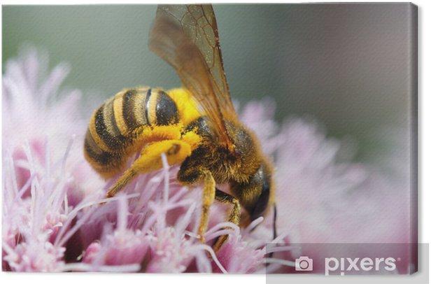Obraz na płótnie Honigbiene mit Pollenkleid - Inne Inne