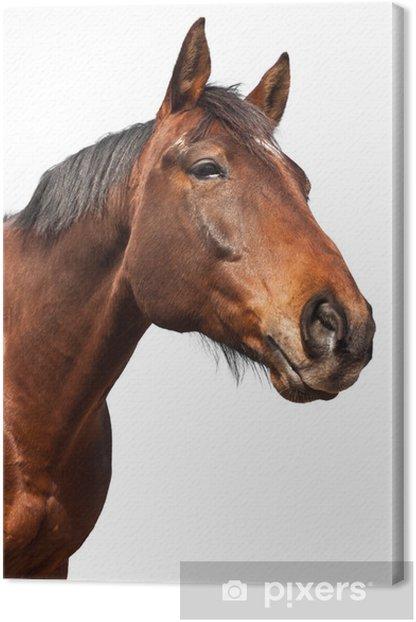 Obraz na płótnie Horse - białe tło - Ssaki