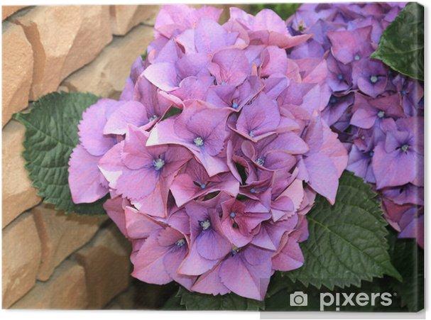 Obraz na płótnie Hortensja różowy - Kwiaty
