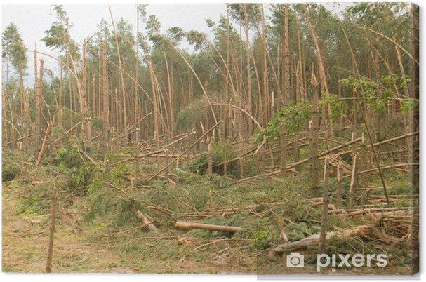Obraz na płótnie Hurricane-efekt - Klęski żywiołowe