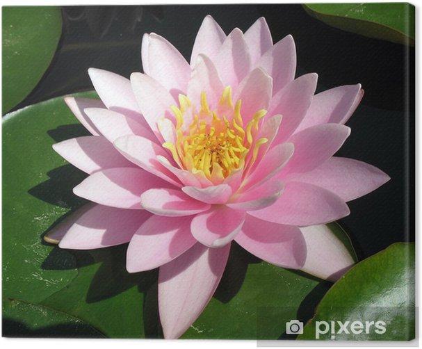 Obraz na płótnie Idealny różowy lilia wodna - Kwiaty