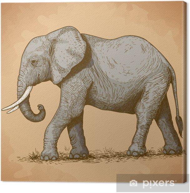 Obraz na płótnie Ilustracji wektorowych z słonia grawerowania - Tematy