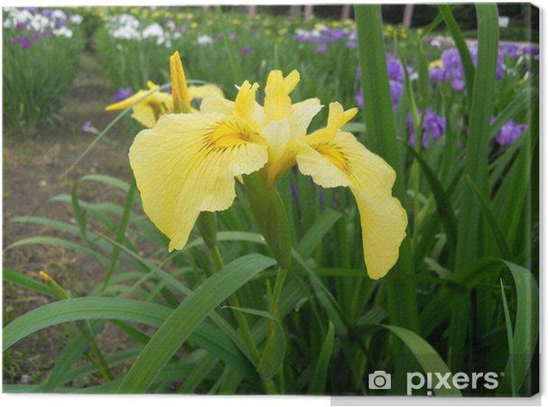 Obraz na płótnie Irys - Kwiaty