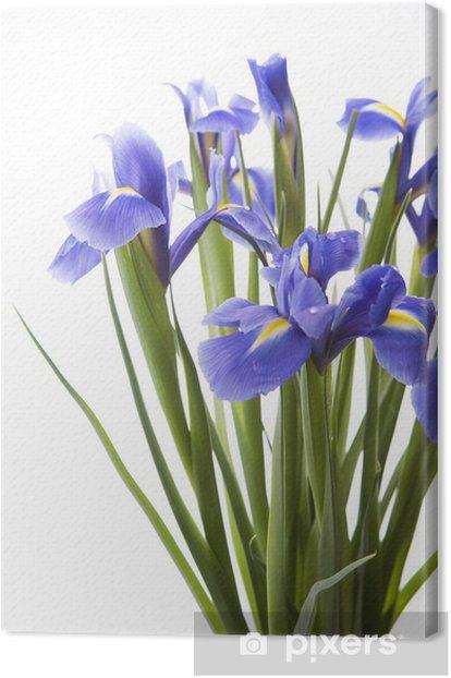 Obraz na płótnie Irysy sztuki - Kwiaty