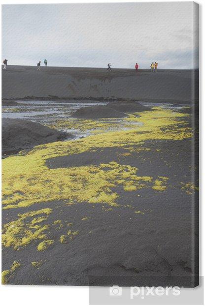 Obraz na płótnie Islandia mech - Pustynie