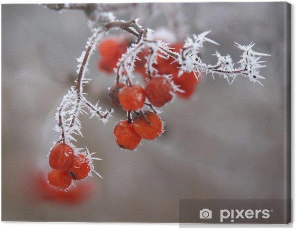 Obraz na płótnie Jagody matowe - Rośliny