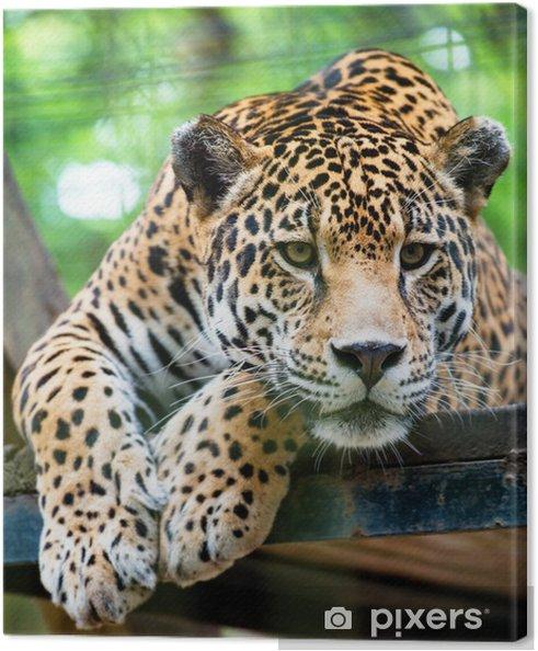 Obraz na płótnie Jaguar Ameryki Południowej -