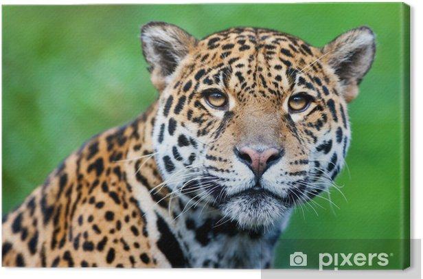 Obraz na płótnie Jaguar - Panthera onca - Ssaki