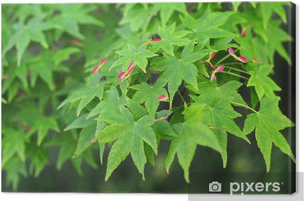 Obraz na płótnie Japanese maple-4 - Rośliny