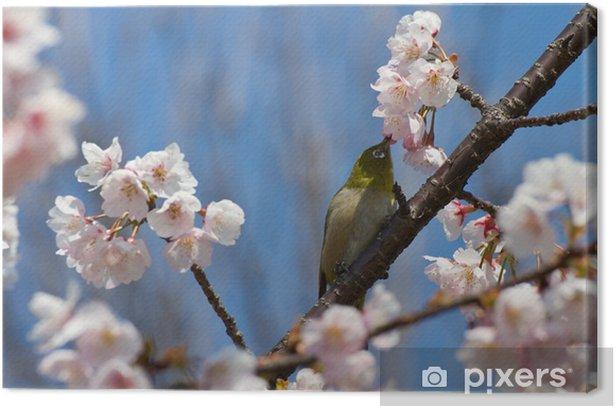 Obraz na płótnie Japanese white-eye na gałązka z sakura - Ptaki