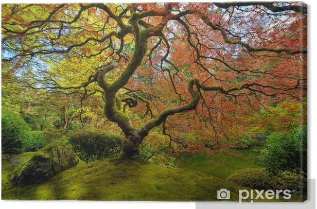 Obraz na płótnie Japońskie drzewo klonu na wiosnę - Rośliny i kwiaty