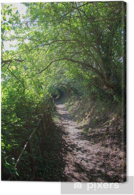 Obraz na płótnie Jasne słońce na leśnej drodze - Lasy