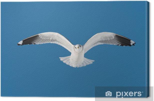 Obraz na płótnie Jeden biały ptak leci na niebie - Ptaki