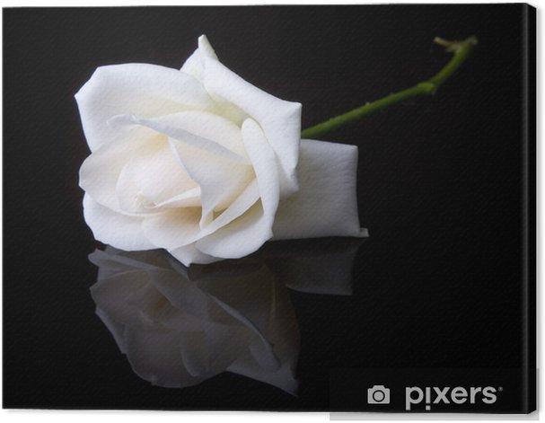 Obraz na płótnie Jedynka spadła biała róża na czarnym tle - Kwiaty