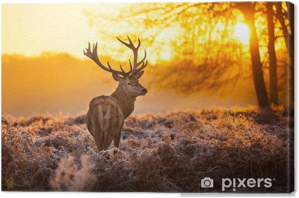 Obraz na płótnie Jeleń szlachetny w porannym słońcu - Style