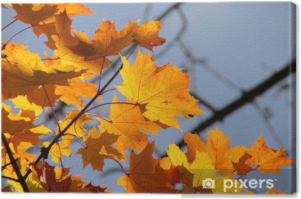 Obraz na płótnie Jesień: kolorowe liście klonu w słońcu - Pory roku