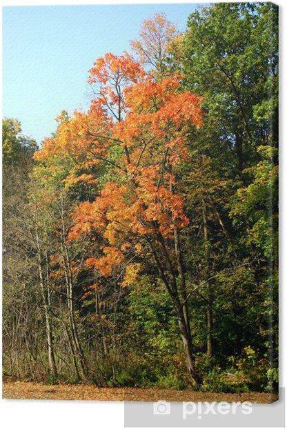 Obraz na płótnie Jesień w naszym parku. - Pory roku