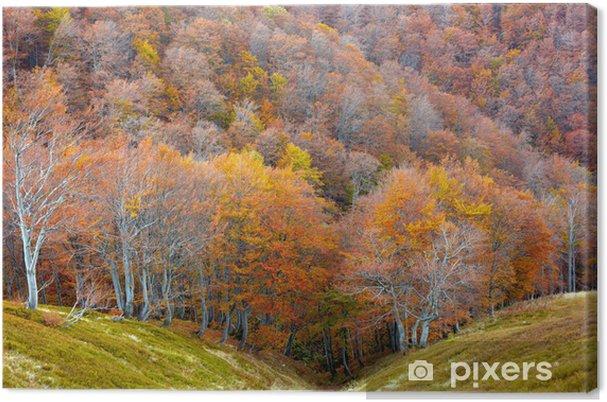 Obraz na płótnie Jesień w parku - Pory roku