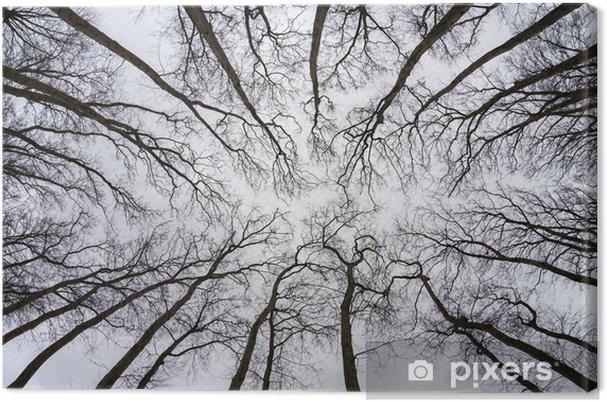 Obraz na płótnie Jesień z drzew widok z góry z nieba - Inne