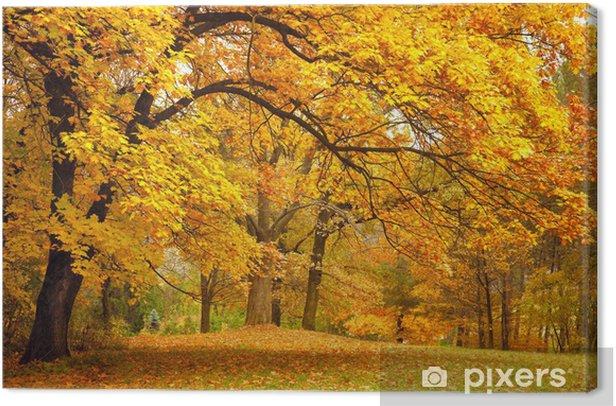 Obraz na płótnie Jesień / złote drzewa w parku - iStaging