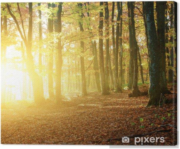 Obraz na płótnie Jesienią drewna - Pory roku