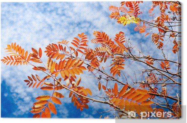 Obraz na płótnie Jesienią drzewa z czerwonymi liśćmi - Pory roku