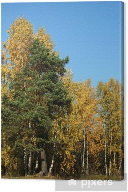Obraz na płótnie Jesienne drzewa - Tematy