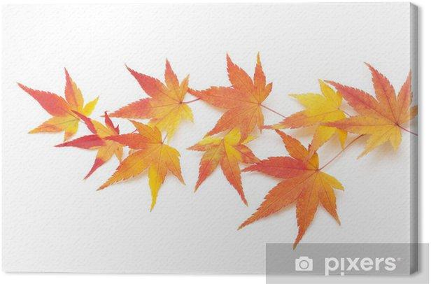 Obraz na płótnie Jesienne liście klonu - Rośliny