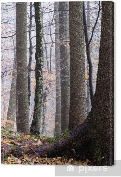 Obraz na płótnie Jesienny las - Drzewa