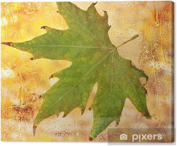 Obraz na płótnie Jesienny liść klonu na szkle z naturalnych kropli wody - Moda
