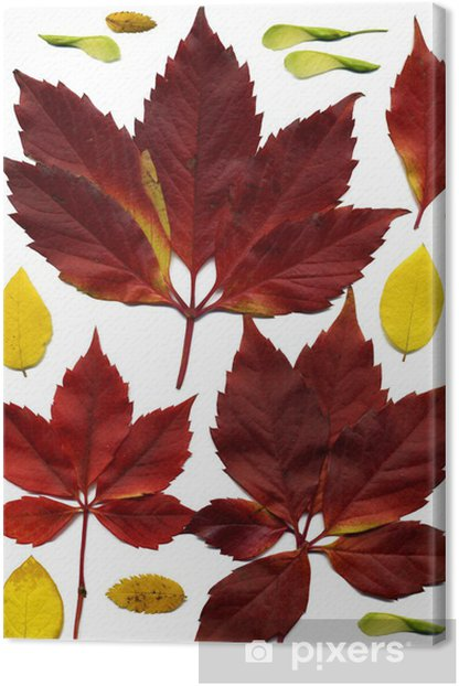 Obraz na płótnie Jesiennych liści - Drzewa
